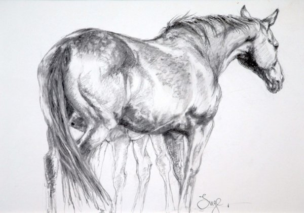 Mare and Foal Study 2